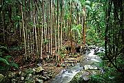Mt Tamborine rainforest & creek