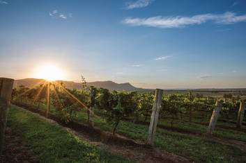 Hunter Valley wineries