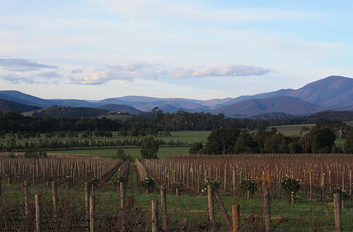 Yarra Valley Food and Wine Day Tour